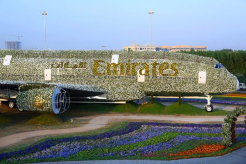 emirates_kwiaty4